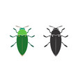jewel beetle on a white background insect animal vector image