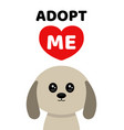 adopt me dont buy dog pet adoption vector image vector image
