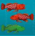 common harlequin fish vector image vector image