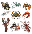 crustacean crab prawns ocean lobster and vector image