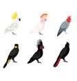 parrots cockatoo set vector image vector image