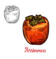 persimmon fruit sketch of exotic asian berry vector image vector image