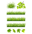 summer grass and leaves collection vector image vector image