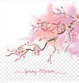 watercolor spring blossom vector image