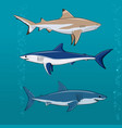 common sharks set vector image vector image