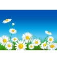 meadow with daisies vector image vector image