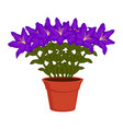 orchid flowers on a flower pot vector image