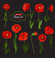 poppy flower icon of red wildflower and green leaf vector image