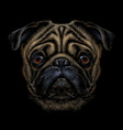 pug hand-drawn color graphic portrait a vector image vector image