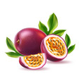 realistic passionfruit with seed green leaf vector image vector image