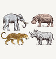 set african animals rhinoceros elephant vector image vector image
