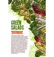 green salad sketch banner of fresh leaf vegetable vector image vector image