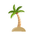 palm with coconuts and leaves vector image vector image