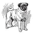 pug dog vintage vector image vector image