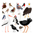 birds collection isolated on white background vector image
