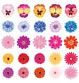 floral bloom set different summer flower vector image vector image