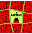 ladybug background invitation card vector image vector image
