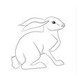 white hare white background vector image