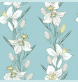 daffodils delicate drawing by hand vector image