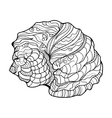 Shell helix coloring book for adults vector image