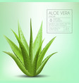 aloe vera with fresh drops of water vector image vector image