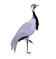 demoiselle crane vector image vector image