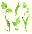 plant leaves vector image vector image