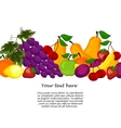 fruit design borders isolated on white vector image vector image