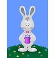 rabbit with gift vector image vector image