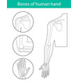 set of of human hand skeleton vector image vector image