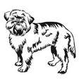 decorative standing portrait of brussels griffon vector image vector image