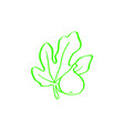 fig abstract logo fig fruits and leaf logo vector image vector image