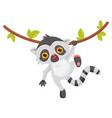 funny lemur hanging on liana animal with long vector image vector image