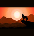 howling wolf at sunset stands on a rock vector image vector image