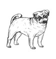 pug dog engraving vector image
