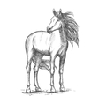 White horse standing with turned head vector image vector image