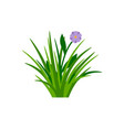 bush of green grass with flower vector image vector image