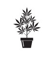 cannabis plant in pot vector image vector image