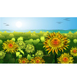Garden of Sunflowers Sketch vector image vector image