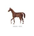 arabian horse hand drawing sketch vector image