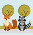 cute fox and raccoon wild animals forest landscape vector image vector image