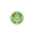 green leaf leaves logo vector image