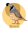 abc cartoon quail vector image vector image