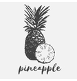 pineapple exotic fruit vector image vector image