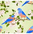 seamless texture bluebirds thrush vector image vector image