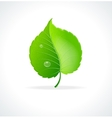 Glossy green detailed leaf vector image vector image