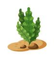 marine green algae seaweed plant underwater vector image vector image