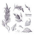 collection of quinoa flowering plants leaves and vector image vector image