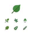 flat icon bio set of alder linden acacia leaf vector image