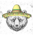 hipster animal bear wearing a sombrero hat vector image vector image